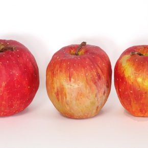 完成「リンゴの模刻」(日曜午前クラス・中1)
