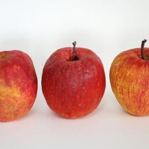 完成「リンゴの模刻」(土曜午前クラス・左から小5、5、4)