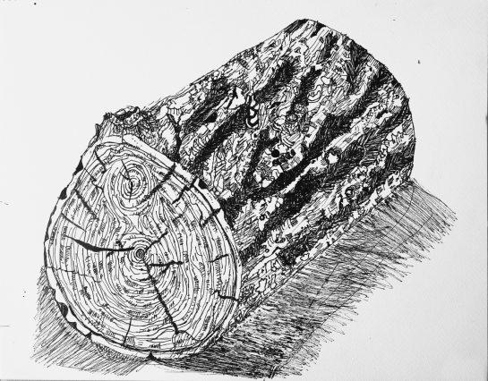 丸太のペン画(小4)