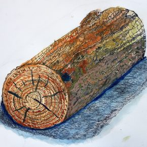 丸太のペン画水彩(小5)