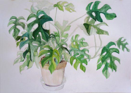 植物の水彩画(中3)