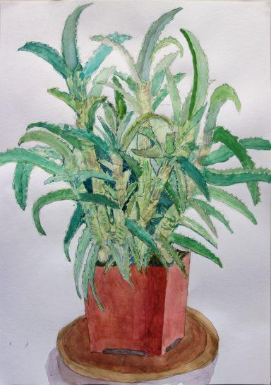 植物の水彩画(小5)