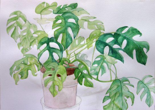 植物の水彩画(小6)